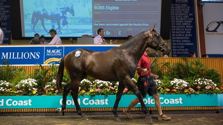 The Fastnet Rock colt consigned by Element Hill selling in the Magic Millions ring on Wednesday