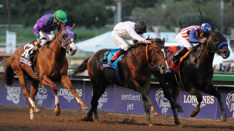 Toast Of New York (black cap) and Jamie Spencer are just edged out by Bayern (far side) in the 2014 Breeders' Cup Classic with California Chrome (left) third