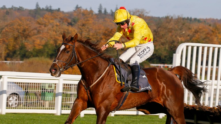 Count Meribel: has improved significantly over hurdles this season