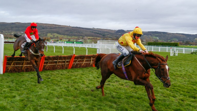 Count Meribel leads over the last at Cheltenham but is reeled in