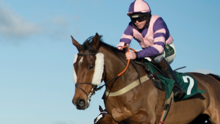 Duel At Dawn: one of the leading lights on the Warwick undercard on Saturday
