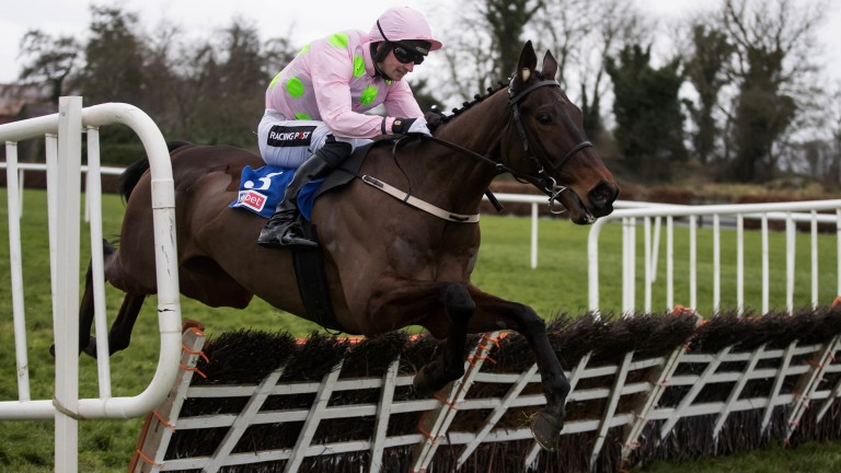 Leading light: Getabird enhances his Supreme claims with an impressive win in the Grade 2 Sky Bet Moscow Flyer Novice Hurdle for Patrick and Willie Mullins at Punchestown