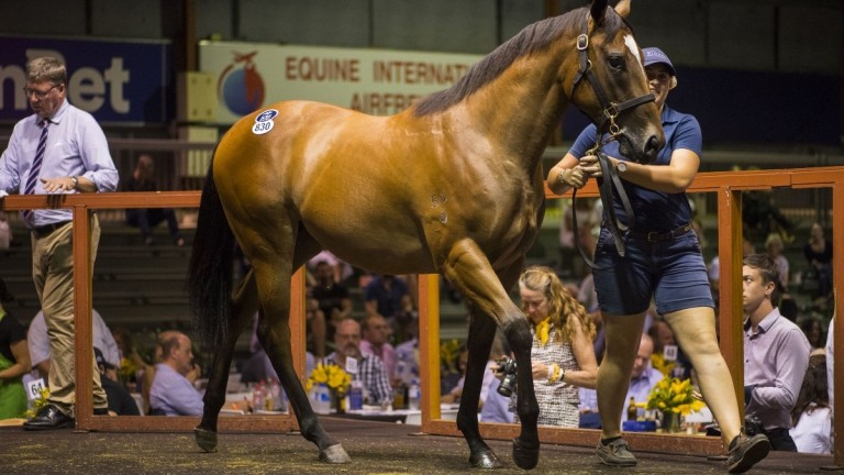 The Snitzel filly out of Intimate Moment snapped up for A$1.1 million by Mark Newnham on day four of the Magic Millions