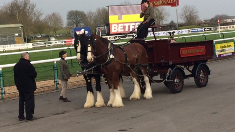 Unwelcome guests: the shire horses had not been declared to be on course by the BHA