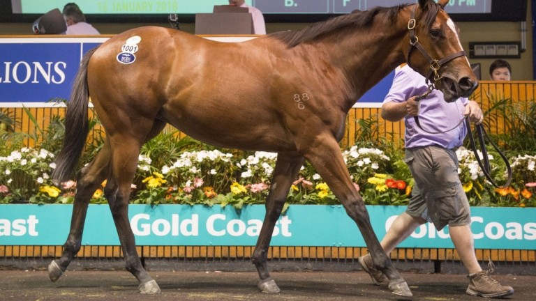 The Not A Single Doubt filly snapped up by Henry Plumptre and Cambridge Stud for A$280,000
