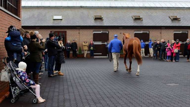 Fans of all age were at Kildangan Stud for the stallion parades