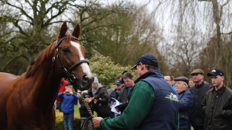 Decorated Knight wows the crowds at the Irish National Stud
