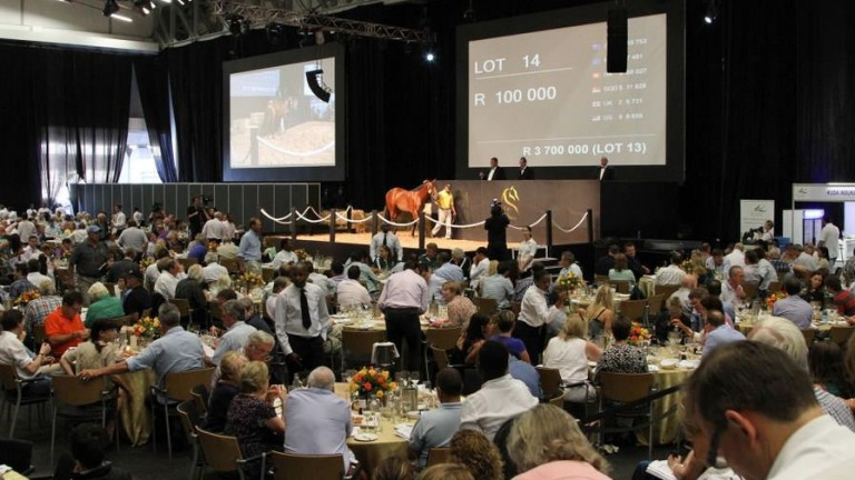The auction ring at the Cape Thoroughbred Sales complex