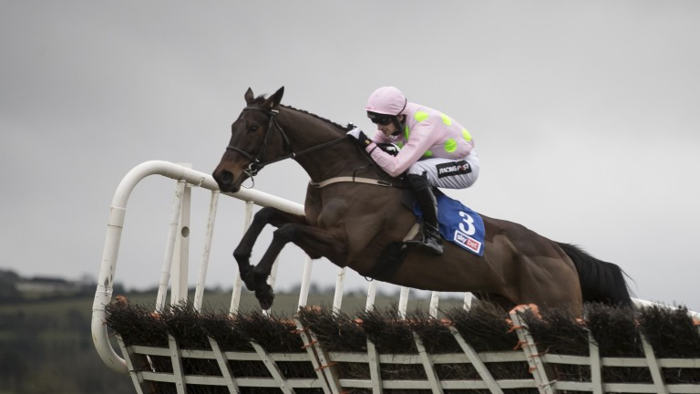 Getabird: the favourite for the Supreme Novices' Hurdle at the Cheltenham Festival