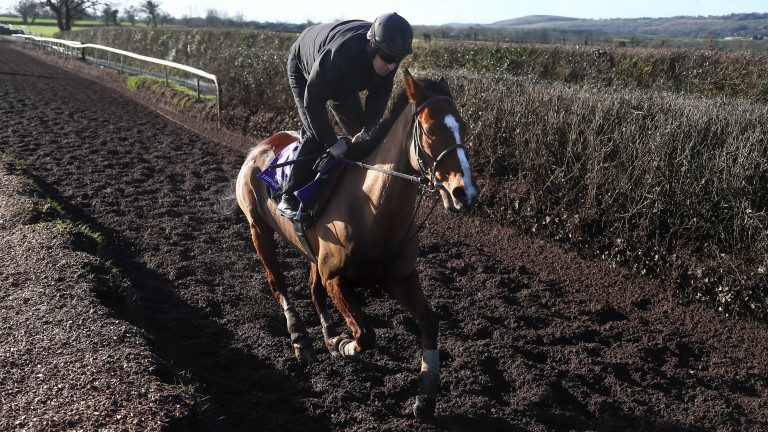 Faugheen works at Closutton under John Codd as the Dublin Racing Festival is launched