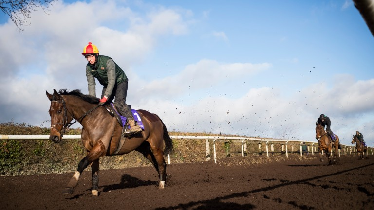 Djakadam (Jason Dear) steps out at Closutton with the Irish Gold Cup as his next target