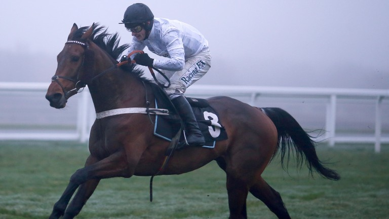 Brain Power: heavily supported to beat Un De Sceaux at Ascot on Saturday