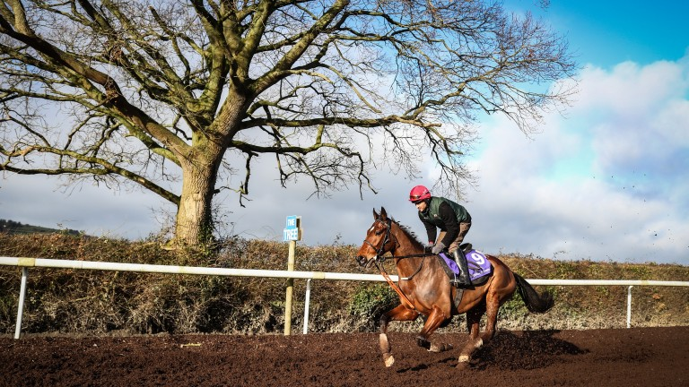 Racing Post Arkle Chase favourite Footpad, pictured working under Kaseem Raza at Willie Mullins' Closutton yard on Tuesday, is entered for the Grade 1 Frank Ward Solicitors Arkle Novice Chase
