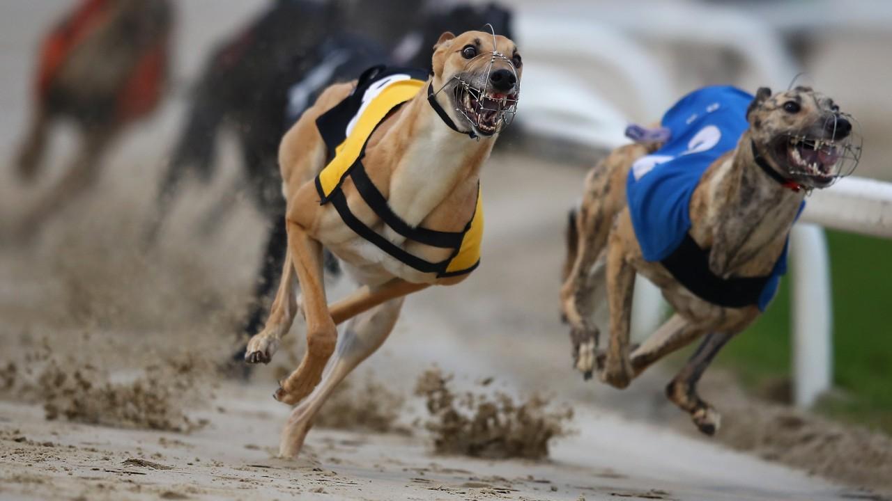 Mildenhall dogs betting scalping binary options with heiken ashi