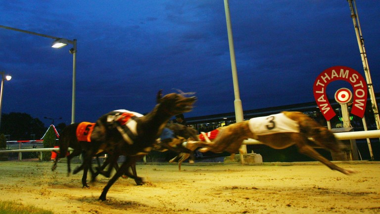 The final greyhound meeting at Walthamstow