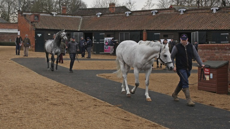 A scene from last year's TBA Flat Stallion Parade