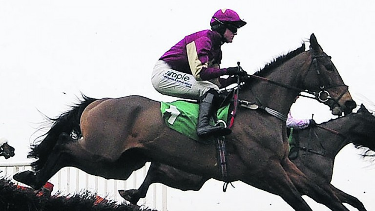 CHEPSTOW, WALES - JANUARY 08: Nick Scholfield rding Alberobello (2R) on their way to winning The harold R Johns Monmouthshire Maiden Hurdle Race at Chepstow racecourse on January 08, 2013 in Chepstow, Wales. (Photo by Alan Crowhurst/Getty Images)