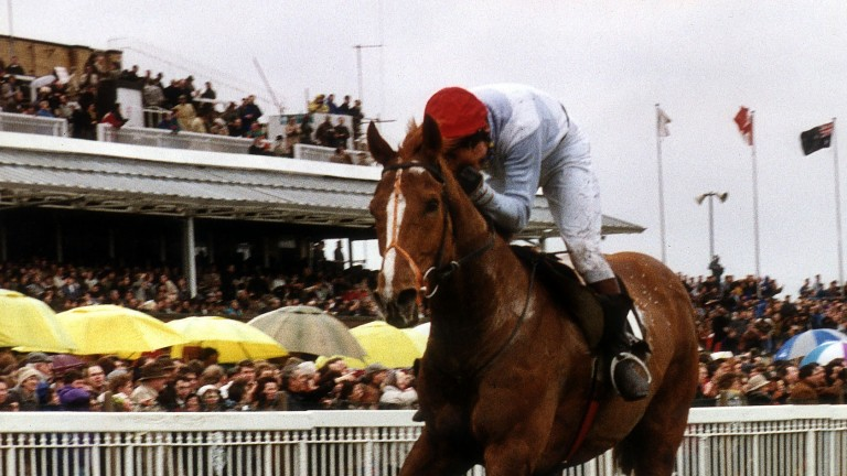Seagram: the 1991 Grand National winner was out of the Bally Royal mare Llanah