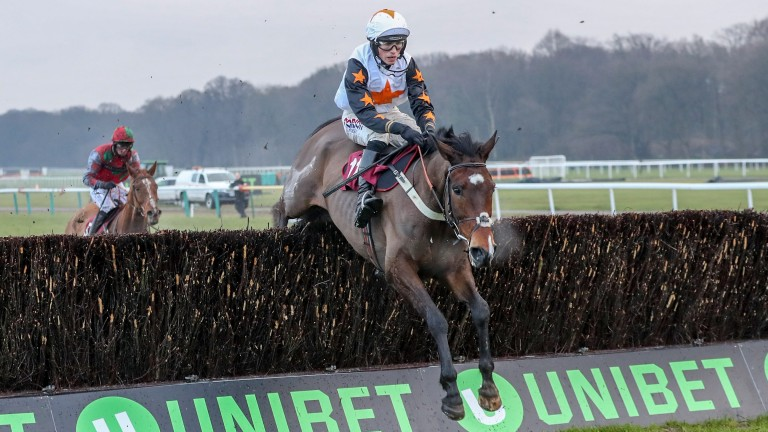 The Dutchman: has been put up 13lbs after winning the Peter Marsh Chase
