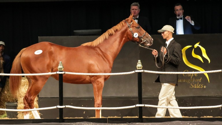 The Frankel colt out of Pale Moon Rising in the ring before fetching R4 million from John Freeman