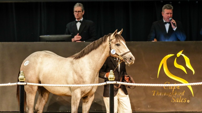 I Am The Secret in the ring before being bought by the Hong Kong Jockey Club for R1.8 million