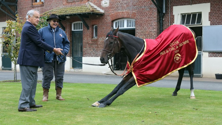 Treve stretches out the day after her second victory in the Prix de l'Arc de Triomphe