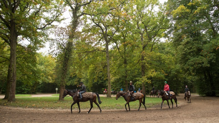 Horses from Criquette Head-Maarek's string exercise in the forest of Chantilly