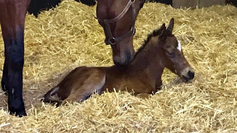 The Ajaya filly foal out of the winning Dubawi mare Fol O'Yasmine born on Sunday
