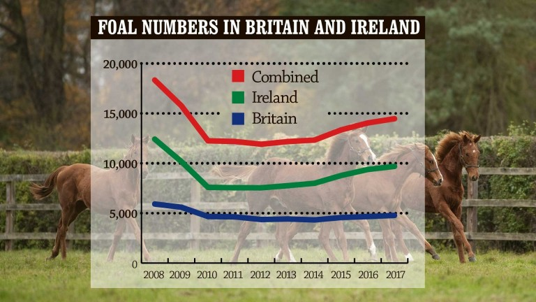 Combined foal numbers for Britain and Ireland have continued to increase