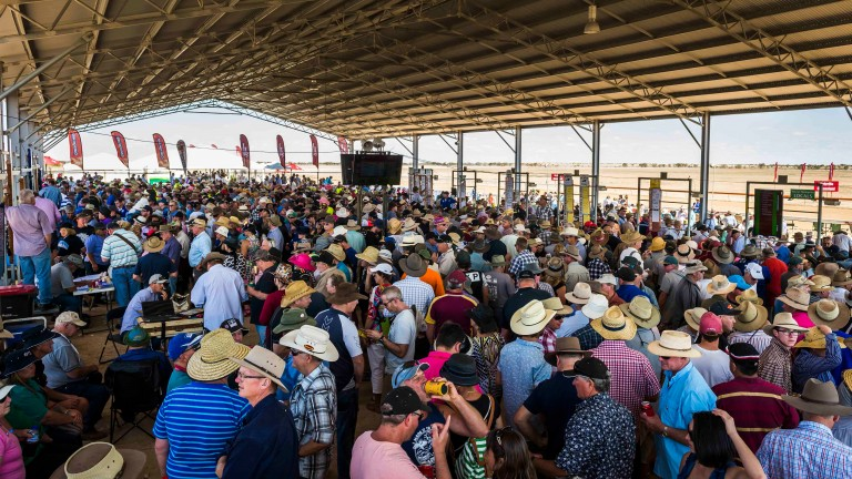 Inside the betting shed at Birdsville
