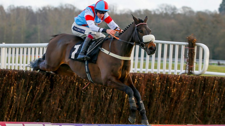 Saint Calvados: has won first two starts over fences for Harry Whittington
