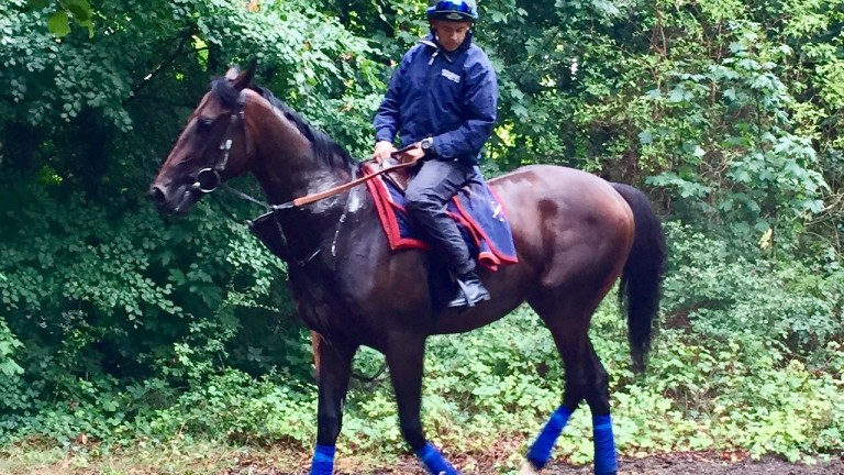 Walk In The Sun: makes his racecourse debut at Kempton on Friday