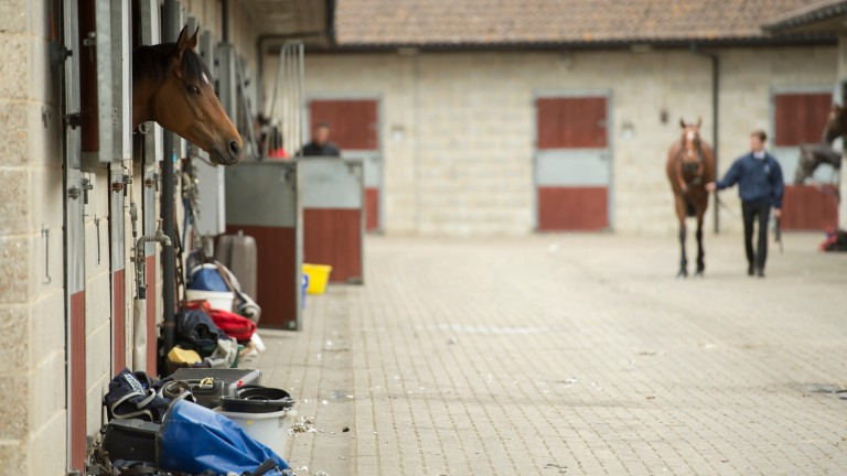 """ITBA hope to """"maximise learning outcomes"""" for those entering the equine industry"""