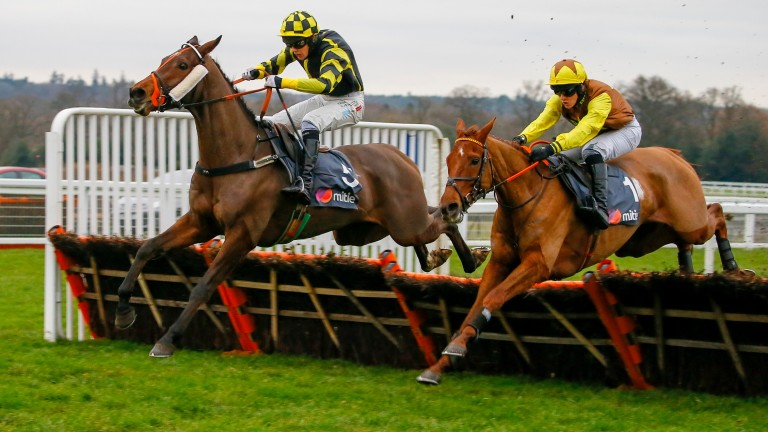 The Mighty Don (right): aiming to qualify for a place in the Pertemps Hurdle final at Cheltenham