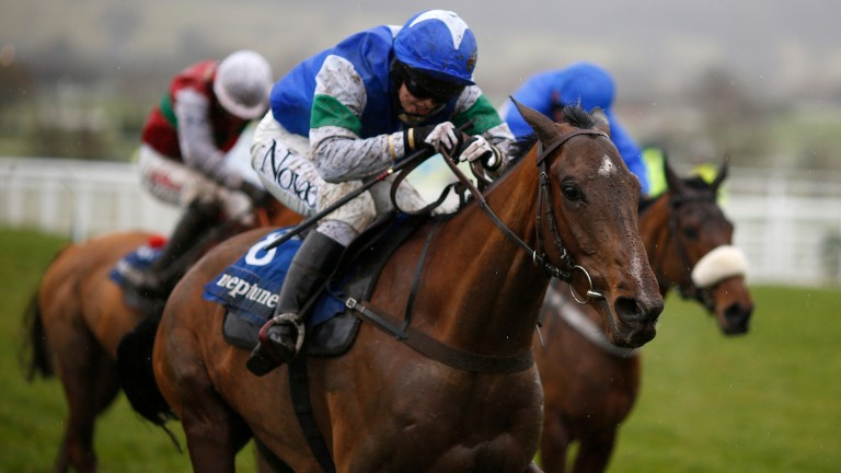 Coo Star Sivola: has run well in two chases at Cheltenham
