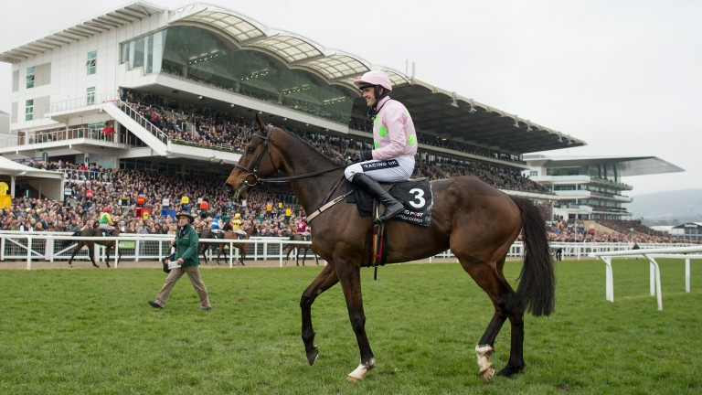 Douvan: could yet make the Cheltenham Festival