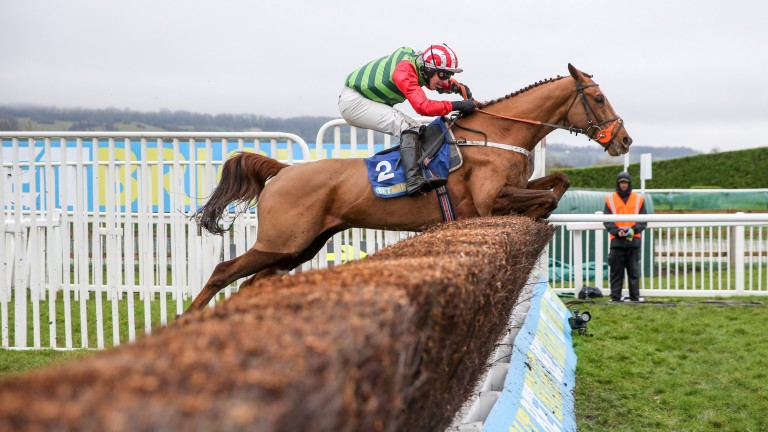 Definitly Red: smart chaser heads for the Gold Cup next