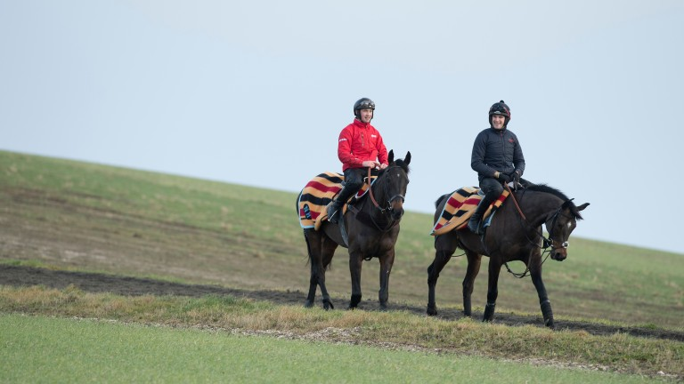 Might Bite and Altior - ridden by assistant trainer Toby Lawes (right) - are well rugged-up on the gallops at Nicky Henderson's Seven Barrows in Lambourn