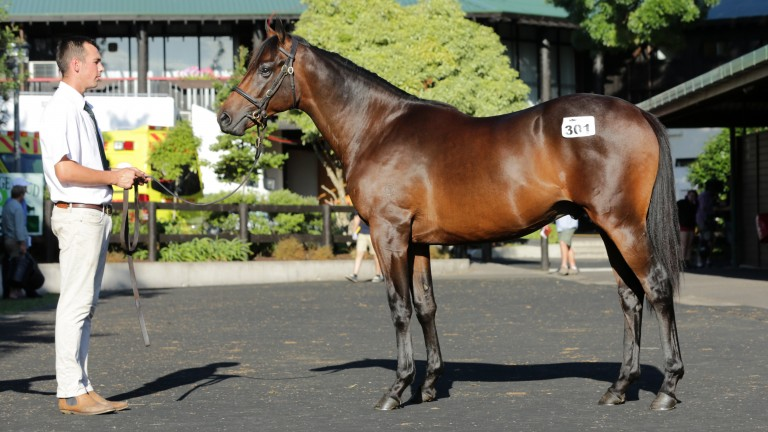 Lot 301: the Savabeel son of Katie Lee was the star of day two at Karaka