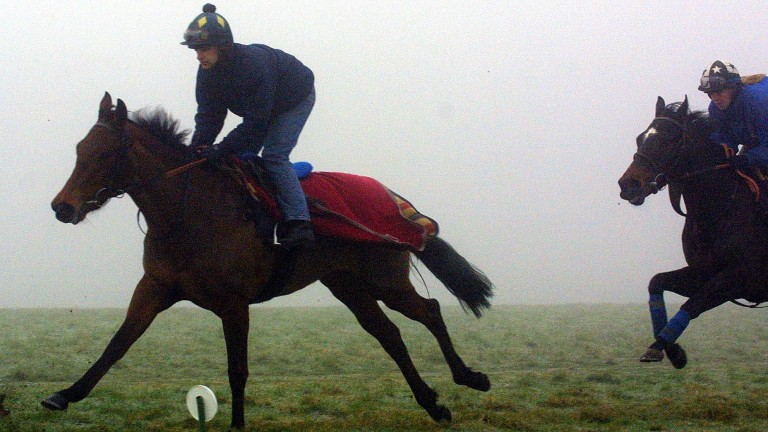 Horses will use the turf canter on Warren Hill for the first time this year from Thursday