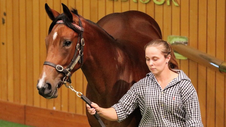 The Not A Single Doubt half-sister to top-class racemare Melody Belle that sold for NZ$900,000