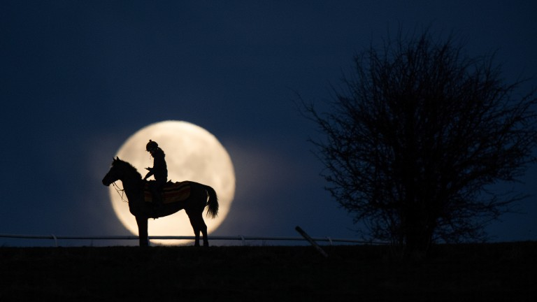 Moon racer: horse and rider are out on the gallops amidst the magical blue supermoon
