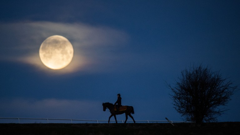 What a sight: the blue supermoon sets over the Mandown gallops on Thursday morning