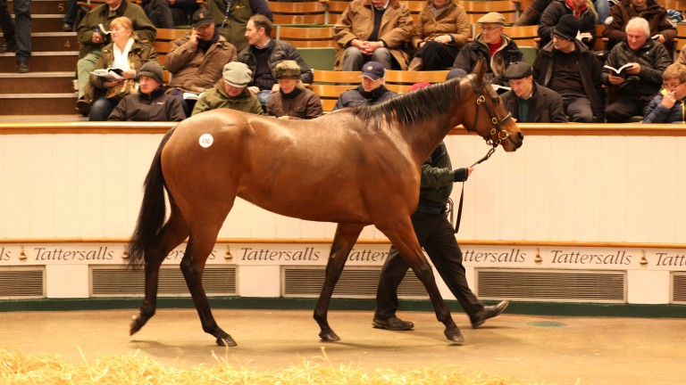 Smoulder sells in the ring for 550,000gns during the February Sale at Tattersalls on Thursday