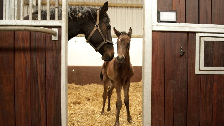 """""""The early notification of the birth of thoroughbred foals helps improve transparency and traceability"""""""