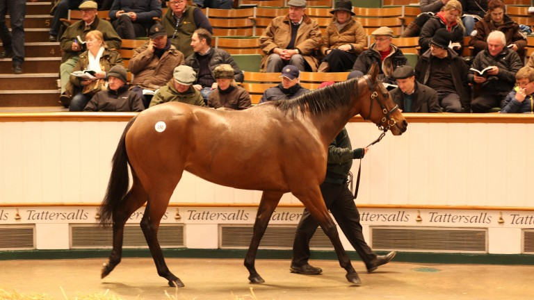 Smoulder, one of 23 lots offered by The Castlebridge Consignment, in the ring before being knocked down to Lordship Stud for 550,000gns