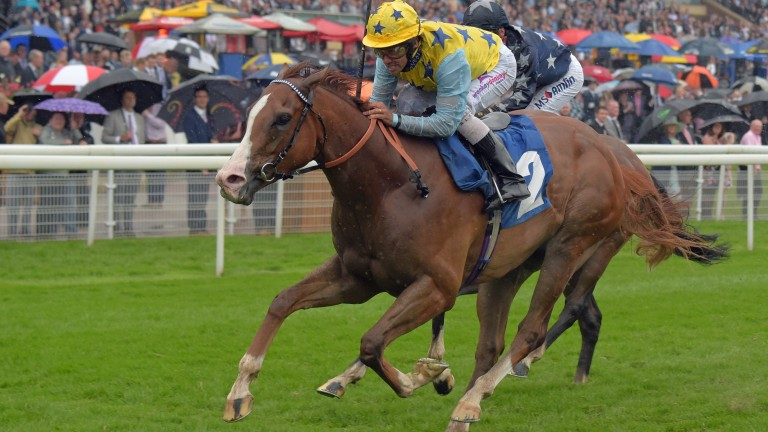 Arcanada, pictured scoring at York in 2016, bids for a hat-trick at Lingfield