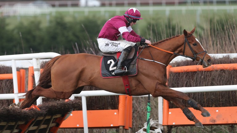 Samcro: let him take his chance in the Champion Hurdle, says Jason lane