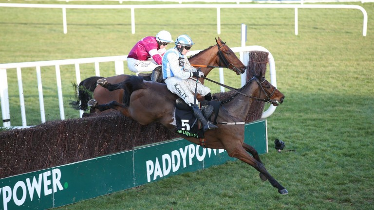 Killultagh Vic: led jumping the last in the Unibet Irish Gold Cup but crumpled on landing