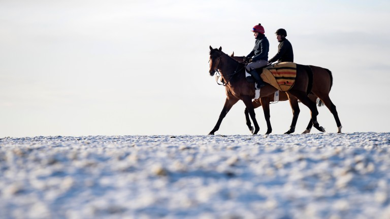 A pair of horses and their riders brave the elements during a freezing morning on the Curragh